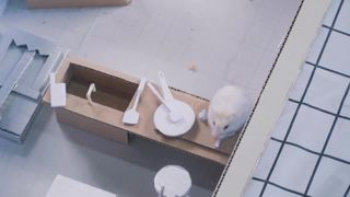 Y2mate.com Hamster stories ep 2...